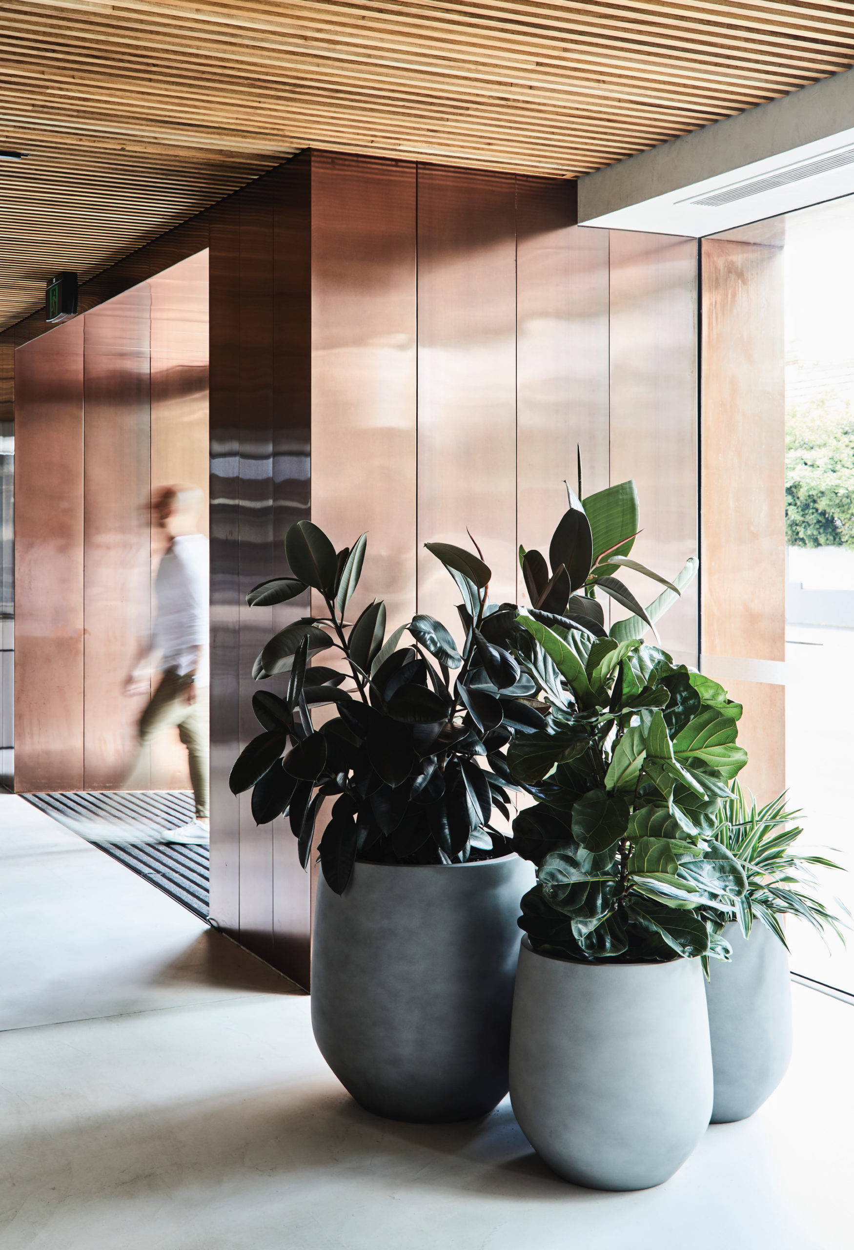 Cera Stribley Architecture Interior Design Winning Appliances Richmond indoor plants